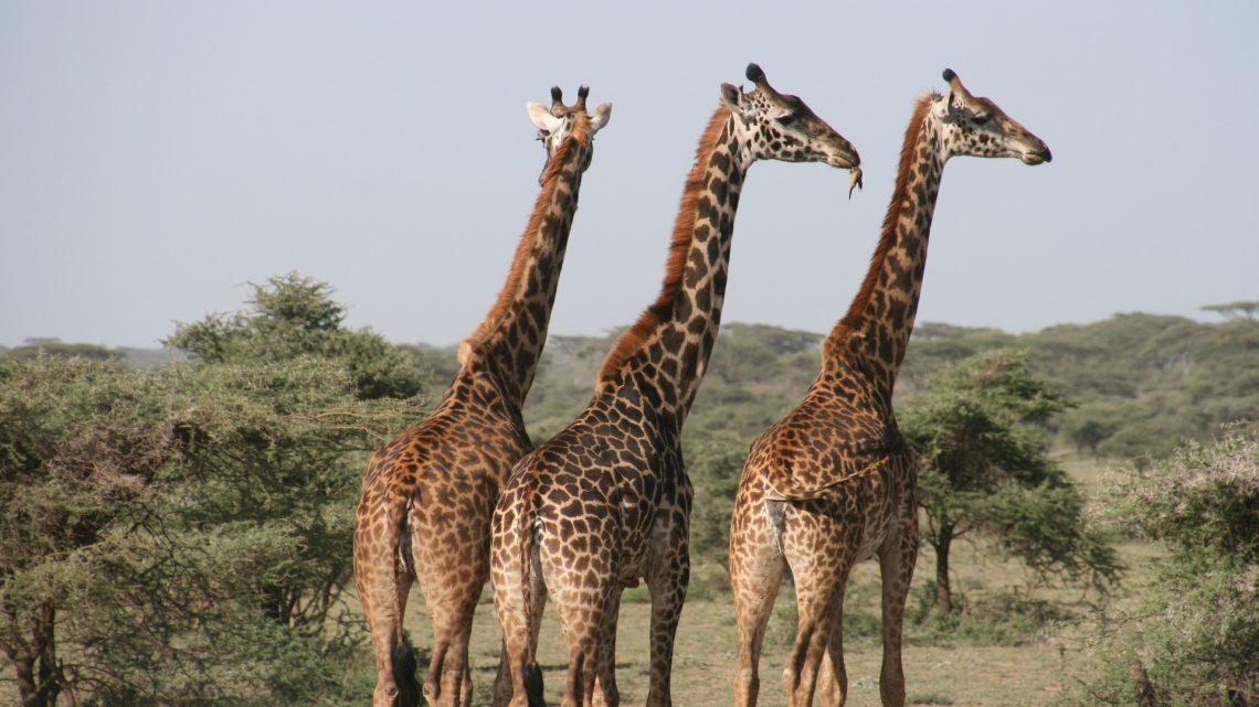 Zoom sur les sites de randonnées intéressants de la Tanzanie