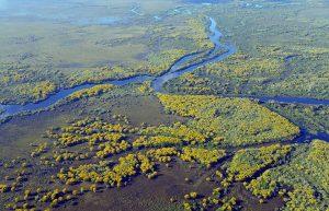 L'exploration de la région de Pantanal lors d'un voyage écologique au Brésil